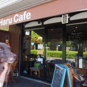 『Haru Cafe』 マハロちゃんと一緒にランチ