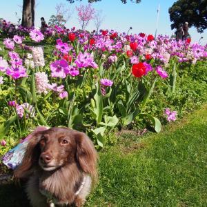 ミックス花壇 山下公園・春の花散歩2020-10