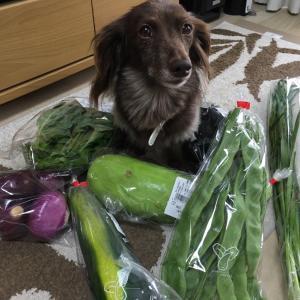 最近の野菜ごはん とペットエコ