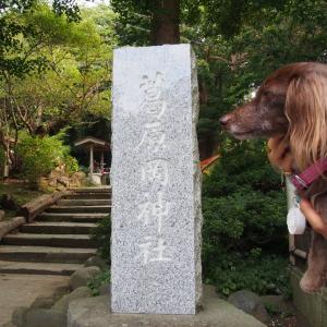 縁結びの神様 鎌倉大仏ハイキングコース-5