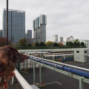 芝浦中央公園 秋薔薇を訪ねて東京散歩 高輪編-5