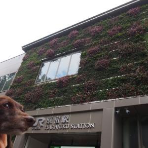 スタートは原宿駅 秋薔薇を訪ねて東京散歩 日比谷編-1