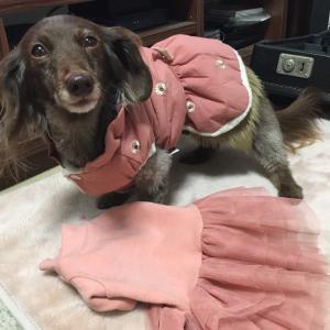マハロちゃんのお洋服 手作り & 鎌倉ドッグ