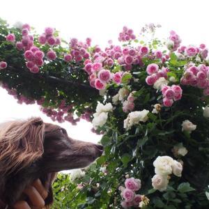 香りの庭からイギリス館の脇の道 ガーデンネックレス横浜2021-52
