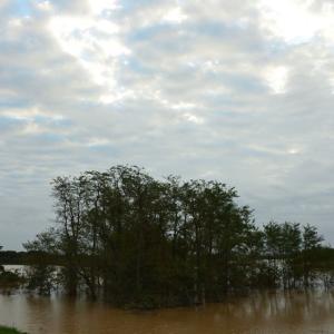 台風一過 渡瀬遊水地 4
