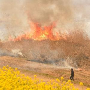 燃える湿原
