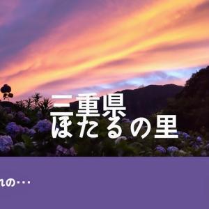 【鈴鹿ほたるの里】ピークを10日ばかり過ぎて行ってみたら大きな紫陽花にビックリ!!㉖(#まったり動画ブログ)
