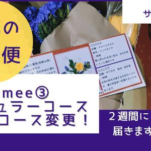 【bloomee】お花の定期便ブルーミー・レギュラーコース・ハロウィンパッケージで「ハロウィンカラーのブーケ」が届きました!(#まったり動画ブログ)