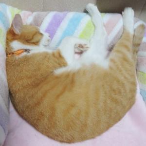 猫はポカポカ。お昼寝です