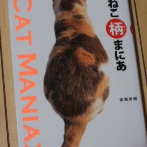 猫の模様は面白い