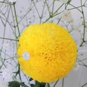 お花のサブスク考え中