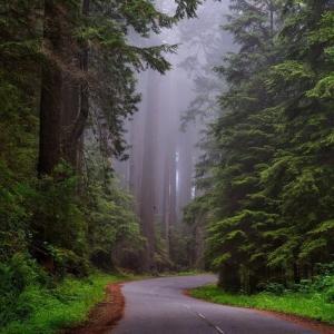 ● ウ・ジョーティカの『自由への旅 マインドフルネス瞑想実践講義』を読む 1
