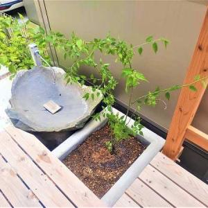 シンボルツリー(?!) ・・・ 入居半年後にして植付け ~ 植木職人の技から始まる庭づくり