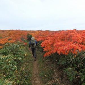 東北紅葉事情 麝香熊沢から稜線に出て栗駒山へ行き回り込んで下る その3