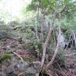 野門からナゲる三界岳  上タケ沢・下タケ沢中間尾根で三界岳へ登り女峰山・富士見峠・野門周回 その1