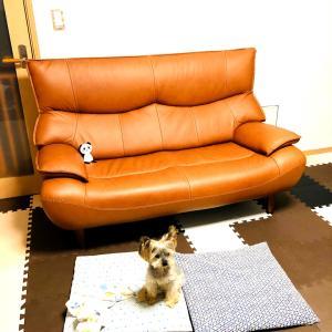 ぐでんと、座りたい!