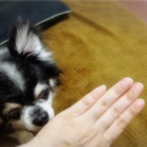 チキンボーンな小指。。(;A;)