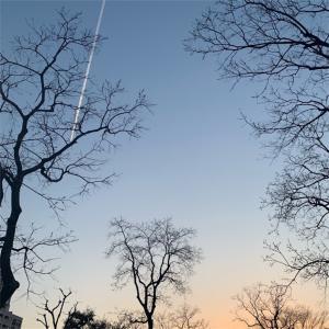 ひこうき雲の流れ星に願いを。