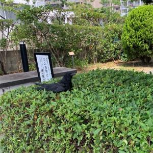 生垣はソファです。