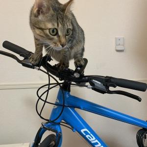 久々の自転車通勤。
