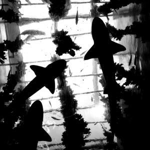 仙台は仙台海の杜水族館へ行った①