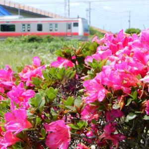 ピンクのサツキとE233系京葉快速