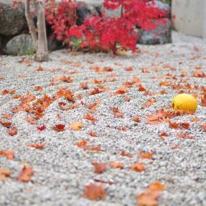 近畿日本ツーリスト公式サイト 金沢からの『日帰り京都』のお値打ちプラン オススメ!