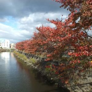 鴻池新田周辺を歩く ②