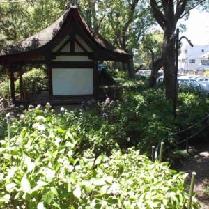 藤森神社の紫陽花祭