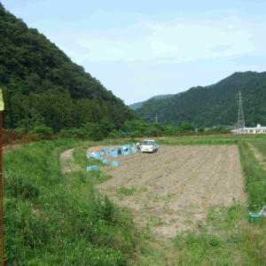 にんにく収穫の見学