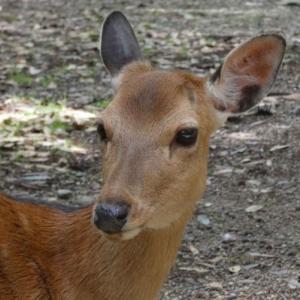 奈良の「鹿苑」にて