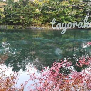 軽井沢の雲場池へ紅葉を見に行ってきました