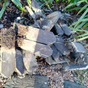 木は土に還るもの・冬は暖かいところでぬくぬくするもの