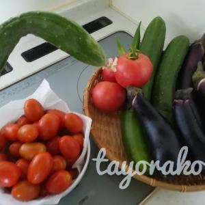 【簡単&ヘルシー】畑で採れたて夏野菜!レシピ集