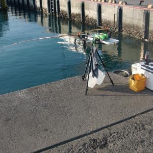 11月13日(水)太平洋側の漁港でチカ釣り