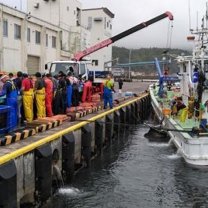 9月6日(日)太平洋側の漁港でチカとイワシ釣り