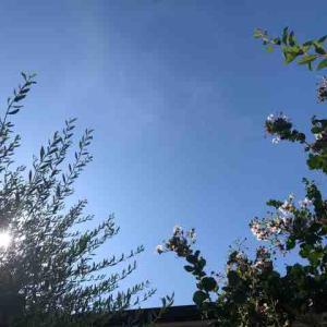 空を見上げる健康法❗️