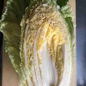 発酵白菜作りました