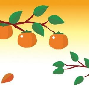 味覚の秋 柿を美味しく食べる少年