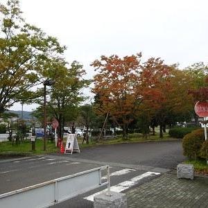 秋も深まり木々が色づいてきました