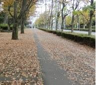 落ち葉が舞う季節 一本道・人生に似ている