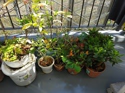 環境が変わっても成長をし続ける植物たち