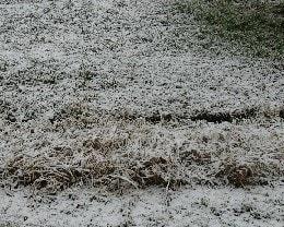 今年初めての雪景色