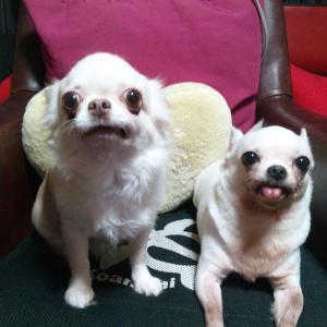 今日の桜子とブブ「台風19号」暴風に耐え寄り添っています。怖いね。。。
