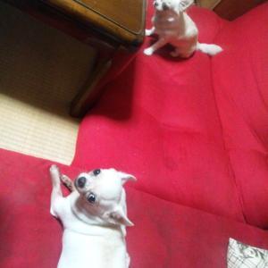 今日の桜子とブブ「少し離れてますね~」