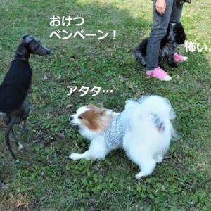 ドッグラン ★ジン vs ルーちゃん★
