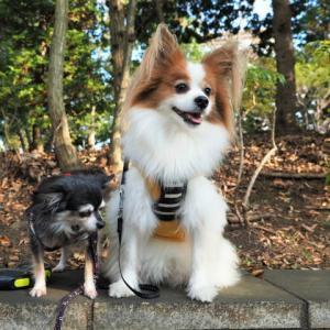 ジンチコと二番構公園を散歩~!