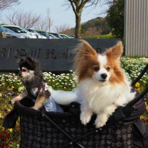 引地川親水公園でお散歩 ★懐かしいお友達と出会った~★