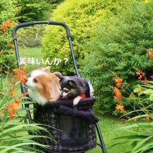 俣野別邸庭園へ ★広い庭を散歩~!★