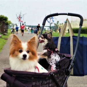 辻堂海浜公園へ ★バスケットを使ってみた!★